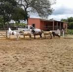 imagem de Mairipotaba Goiás n-8