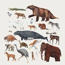 Animal Chart Of The Holocene Extinction Comforters