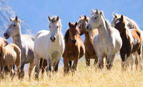 Image result for photos of horses