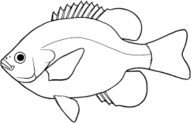 bass fish drawing step by step. Exellent Step Key To BC Freshwater Fish Families  Staff Profiles Throughout Bass Drawing Step By