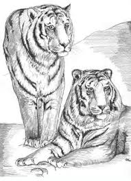 Small Picture intricate cat coloring pages for adults tiger coloring pages for