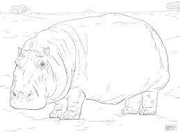 Printable Coloring Page Hippo Printable Educations For Kids