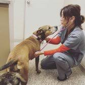photo of garden grove dog cat hospital garden grove ca united states