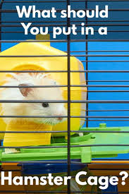 what should you put in a hamster s cage