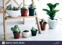 Holz Faltleiter Wie Regale Für Pflanzen In Natürlichen