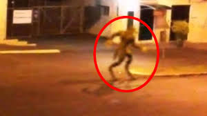 real mythical creatures found alive. Exellent Creatures For Real Mythical Creatures Found Alive