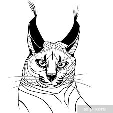 Nálepka Kočka Kotě Caracal Divoké Zvíře Skica Tetování Vektor Pixerstick