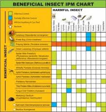 Beneficial Insects Chart Beneficial Insects For Your Garden The Homestead Survival