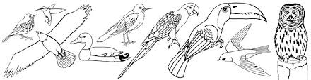 Small Picture Bird Coloring Pages
