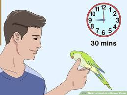 image led entern a quaker parrot step 7