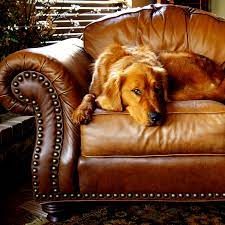 leather furniture cleaning glasgow