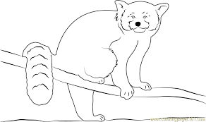 Small Picture Cute Red Panda Coloring Page Free Red Panda Coloring Pages