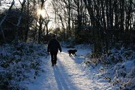 Image result for walk dog public domain