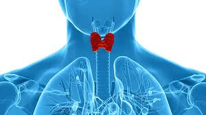 Thyroid Test Range Chart India Thyroid Function Tests Procedure Side Effects And Results