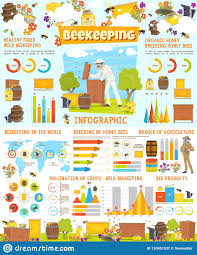 Honey Processing Flow Chart Infographic Of Beekeeping Statistics With Charts Stock