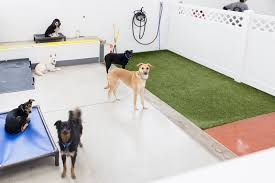 Watch your dog on a live webcam. Stay Dog Daycare Boarding Services In Cleveland Ohio