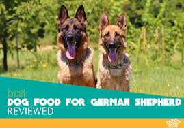 Wellness Core Puppy Feeding Chart Best Dog Food For German Shepherd Reviews And Ratings For 2019
