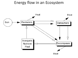 Ecology And Ecosystem New