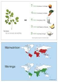 Moringa Comparison Chart About Moringa Green World Ventures Llc