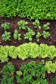 crop rotation tips for hobby farm beginners