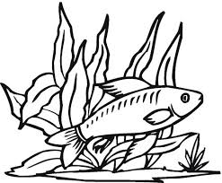 Small Picture fish Free Printable Fish Coloring Pages