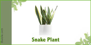 dress up your home with these indoor plants that dont need sunlight best office plant no sunlight