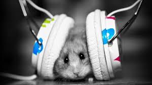hd wallpaper 1080p music.  Music 1920x1080 Music Fan Hamster Full Hd Desktop Wallpaper 1080p  Download  Inside Hd Wallpaper O