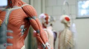 Картинки по запросу картинки робот с мышцами