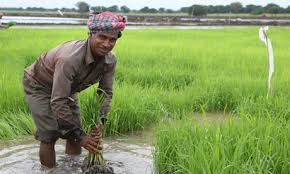 Agriculture as a global village 2