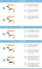 Animal Hospital Of St Maarten Our Services Pet Weight