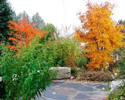621 Best Fall Gardening Images On Pinterest  Kitchen Gardening Fall Gardening