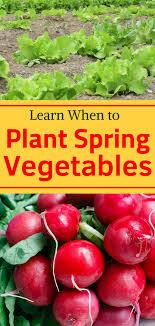 spring vegetables organic vegetable garden