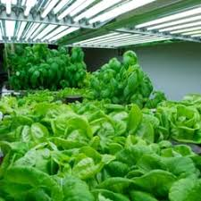 indoor gardening supplies. Photo Of Campbells Indoor Gardening Supplies - Bristolville, OH, United States. And Lettuce