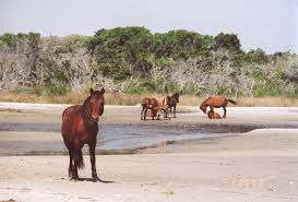 Image result for cape lookout national seashore