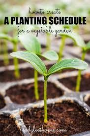 vegetable garden planting vegetables