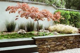 great design tree japanese maple