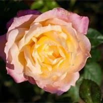 Bertie Estelle Ratliff Obituary - Springhill, Louisiana , Bailey ...