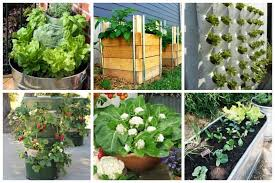 enjoy tasty homegrown vegetables on your doorstep deck patio balcony or