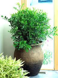 indoor plants low light low light office plants office light plants low light office plants best