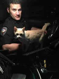 Animal Cop Cop Becomes Foster Dad To Cat Who Jumped In His Police Car