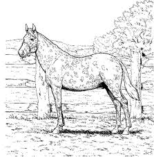 Coloring Pages Beautiful Mustang Horse Coloring Pages To Print P