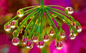 Water Drop In Flower Hd - 3000x1875 ...