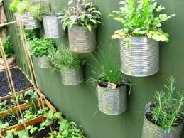 herbs recycled containers