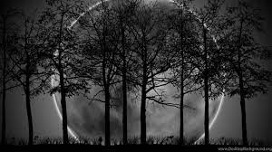 Dark Forest With Moon Wallpapers ...