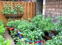patio gardening ideas garden idea backyard container tomatoes home for vegetables back small balcony lay