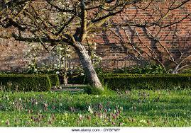 Thornhayes Nursery  Devon Grower For Specimen Trees Specialist Underplanting Fruit Trees