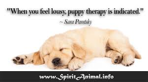 Quotes About Dogs Adorable Dog Quotes