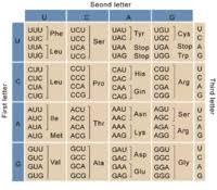 Universal Genetic Code Chart Genetic Code Wikilectures