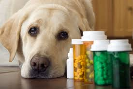 veterinary pharmaceutical s representative how to get hired in animal s