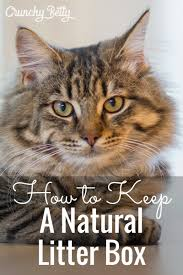 how to keep a natural litter box and other cat nonsense
